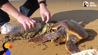 Download Guys Use Lighter to Rescue Sea Turtle Tangled In Trash | The Dodo Video