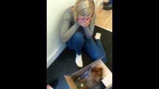 Download Puppy surprise 2015! Video