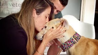 Download THIS DOG WAS NEVER KISSED IN HER ENTIRE LIFE... UNTIL TODAY Video