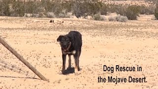 Download Epic Mojave Desert Dog Rescue Mission - A MUST SEE. Please Share. Video