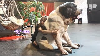 Download 트릭아트 박물관가서 찍은 거 아니고요 진짜 실사임 ㅣ This Super Giant Dog Is Taller Than You *LIT* Video