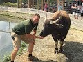 Download Animal Adventures with Jordan: Water Buffalo Video