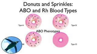 Download Blood Types: ABO and Rh (with donuts and sprinkles!) Video