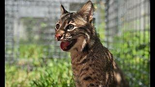Download A Special Bobcat Update - Part 2 Video