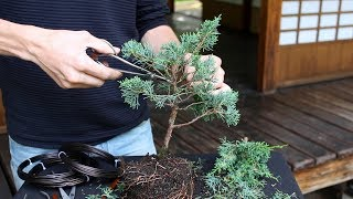 Download How to create a Bonsai tree (DIY) Video