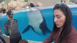 Download Sea World San Diego Orca Encounter 1/14/2018 Video