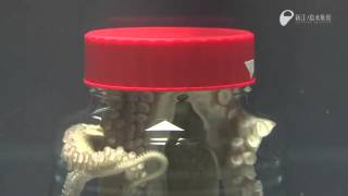 Download Octopus Escapes Jar Video
