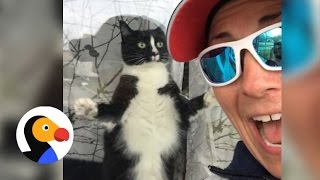Download Funny Cat Greets Mail Woman Daily   The Dodo Video