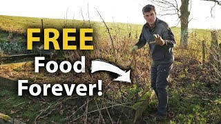 Download How ONE PLANT Can Give You FREE FOOD Forever! (And Plenty of it!) Video