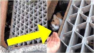 Download When A Guy Saw This Little Face Emerge From A Storm Drain, He Knew He Couldn't Keep Driving Video