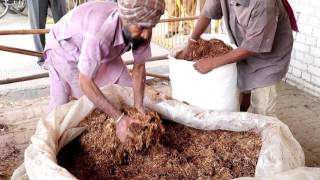 Download Utilization of kinnow waste as livestock feed Video