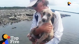Download Puppy Rescued On Deserted Island + Other Highly Unusual Animal Rescues | The Dodo Top 5 Video