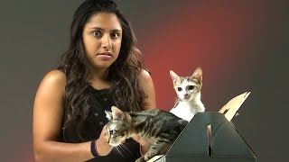 Download People Who Hate Cats Meet Kittens Video