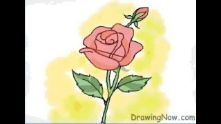 Download How to Draw a Red Rose Video