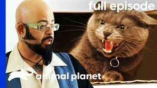 Download Aggressive Cat Is Stopping Owners From Getting Married!   My Cat From Hell (Full Episode) Video