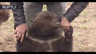 Download Meanwhile in Russia: Mansur the bear lives at an airfield Video