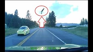 Download Deer Gets Hit By FAST Car And Goes Flying 50 Feet In The Air Video