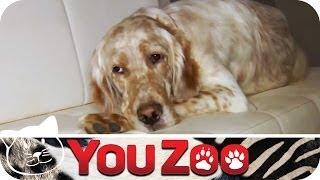 Download Luxus-Hundehotel vs. Tierheim - der spannende Test │YouZoo Video