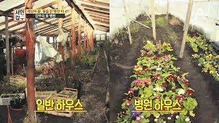 Download 다 죽어서 온 꽃, 갑부의 손길로 다시 살아난다...?!  서민갑부 200회 Video