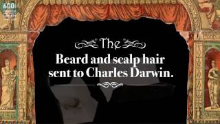 Download Curious Objects: Beard and scalp hair sent to Charles Darwin Video