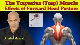 Download The Trapezius (Trap) Muscle...The Major Effects of Forward Head Posture - Dr Mandell Video