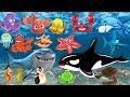 Download Pelajari nama dan suara hewan laut | Animasi gambar binatang untuk anak-anak: lumba-lumba, hiu, paus Video