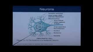 Download Anatomy and Physiology Chapter 12 Part 1: Nervous System/Neural Tissue: Anatomy and Physiology Help Video