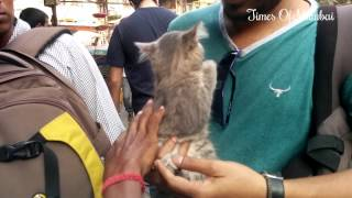 Download Very Cute Pets, Labradors & Persian Cats For Sale In Crawford Market Mumbai Video