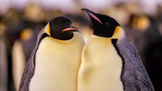 Download Best Antarctic Animal Moments | Top 5 | BBC Earth Video