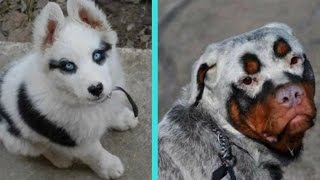 Download 31 Unique Dogs With Unbelievable Fur Markings Video