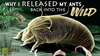 Download WHY I RELEASED MY PET ANTS BACK INTO THE WILD - VERY SAD DAY! Video