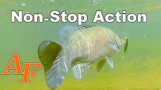 Download Adventure Kayak Fishing Sooty Grunter Cattle Creek Andysfishing Fish Video EP.207 Video
