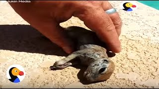 Download Drowning Prairie Dog Rescued by Guy | The Dodo Video