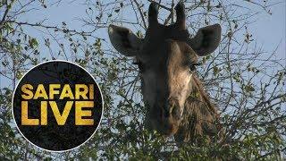 Download safariLIVE - Sunrise Safari - 2018, 18. June Video