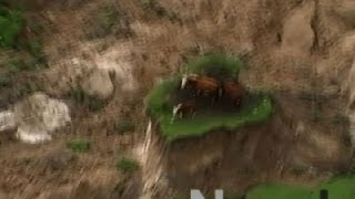 Download Raw: New Zealand Earthquake Strands Cows Video