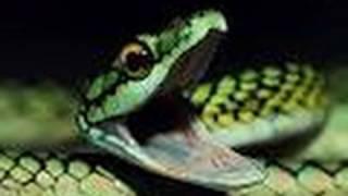 Download Snake Bytes TV - Handling the Meanest Snakes in the World! SnakeBytesTV Video
