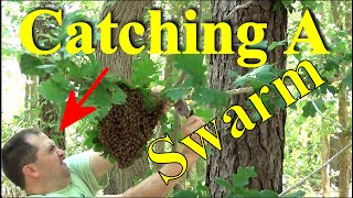 Download How To Catch A Swarm - Two Ways To Capture Thousands Of Honey Bees Video