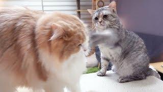 Download 꿀호떡 먹으러 왔다가 냥냥펀치 맞은 고양이 Video