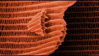 Download THIS IS A BUTTERFLY! (Scanning Electron Microscope) - Part 2 - Smarter Every Day 105 Video