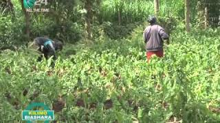 Download Kilimo Biashara: Growing African Vegetables Video