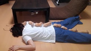 Download 飼い主が倒れたらハムスターは助けてくれるのか?part1おもしろ可愛いハムスターDoes the hamster help if the owner falls down? Video