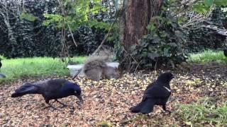 Download Part 4 (Missing Livestream Part) Wednesday April 26th, 2017 Squirrel Feeder Cam and Bird Feeder Cam Video