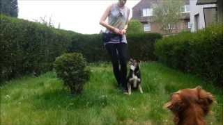 Download Hundetraining Unterordnung! Kleine Einblicke in unser aktuelles Hundetraining. Heelwork Video