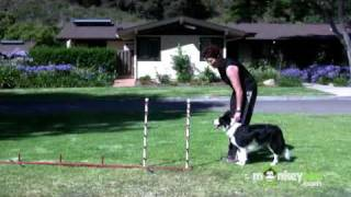 Download Dog Agility - Training your Dog to Weave Video