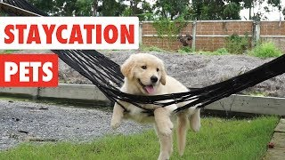 Download Staycation Pets | Funny Pet Video Compilation 2017 Video