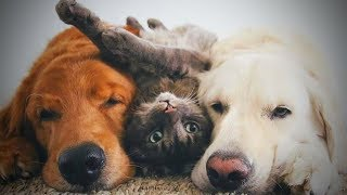 Download Cute Cats and Dogs 😻🐶 Cats and Dogs Friendship (Part 2) [Funny Pets] Video