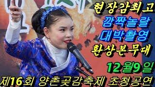 Download 💗버드리 외국인 깜짝놀랄 배꼽빠짐 웃음대박최고 12월9일💗 양촌 곶감축제 초청 공연 Video