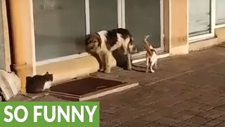 Download Friendly cats share meal with stray dog Video