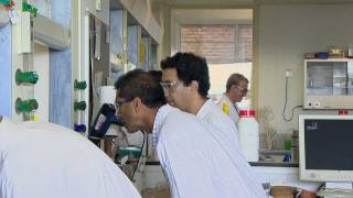 Download Research in Synthetic Organic Chemistry Video