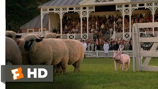 Download Babe (8/9) Movie CLIP - The Sheep Pig (1995) HD Video
